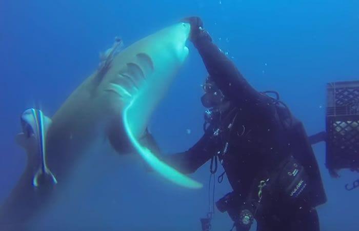 Josh Eccles ayudando al Tiburón