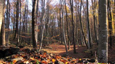 Natural Park  Volcànica Area of la Garrotxa