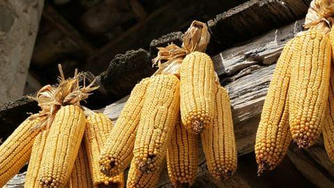 Artesania, gastronomia i tradicions