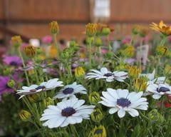 Flors d'exterior i interior