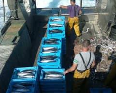 Pescaturisme - caixes