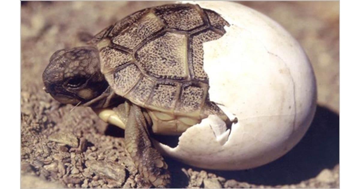 Centro de Reproducción de Tortugas (Garriguella) - Llançà i tu